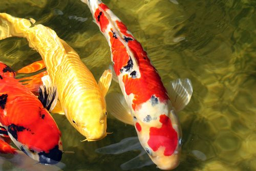 A doença nos peixes podem ser evitadas com a prevenção