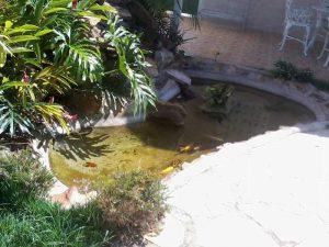 Filtros nacionais para lagos com cascata