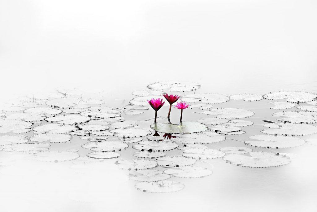 Plantas para lagos ornamentais