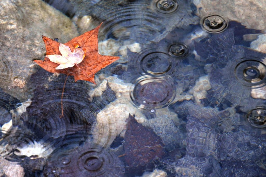 A poluição orgânica em lagos ornamentais artificiais
