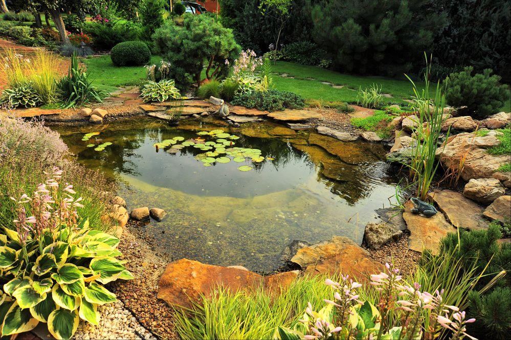 problemas comuns em lagos ornamentais